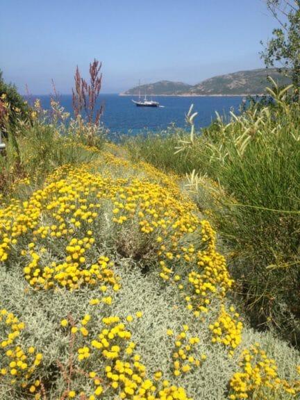 Capu Biancu in Corsica